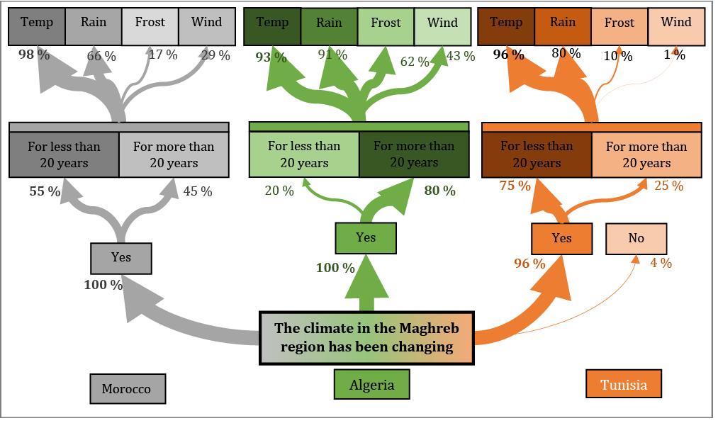 Figure 6 : Perception of climate and its change in the MAT (Morocco, Algeria, Tunisia) region in terms of temperature increase (temp.), decrease of precipitation (rain), wind and frost effects.